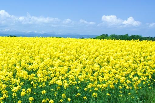 福山市 ネイル Kishimi(キシミー) 春ですよ!